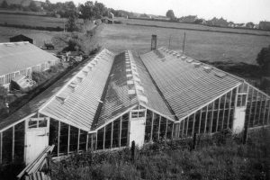 1960 - The Greenhouses